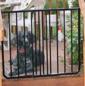 Keep your dog safe during summer get-togethers