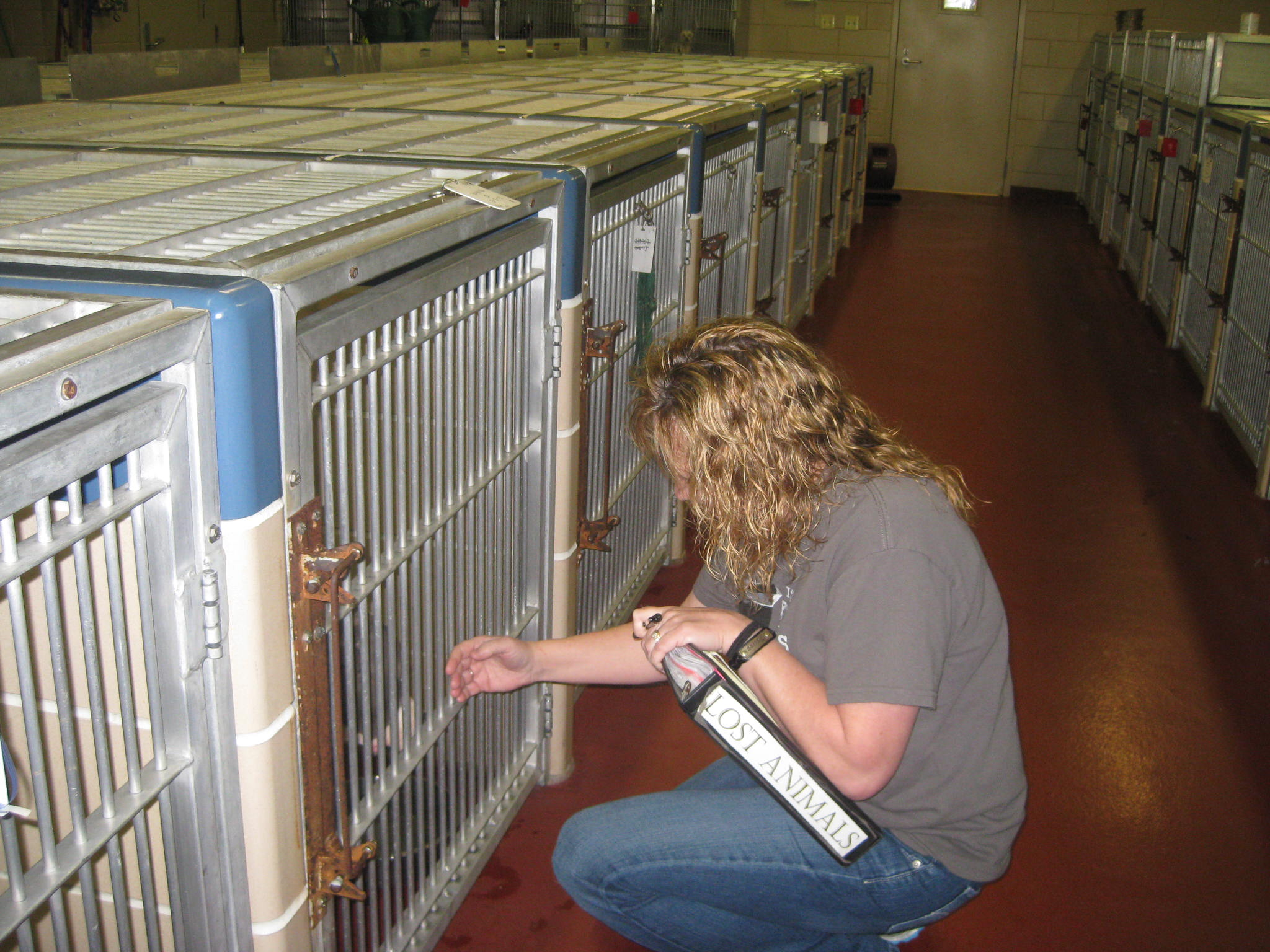 Patty, an Animal Control Officer at Winnebago County Animal Services in Rockford , Illinois checks the kennels for dogs matching the descriptions in the Lost Dog reports.