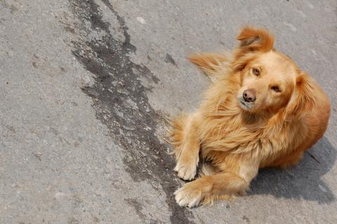 stray dog free