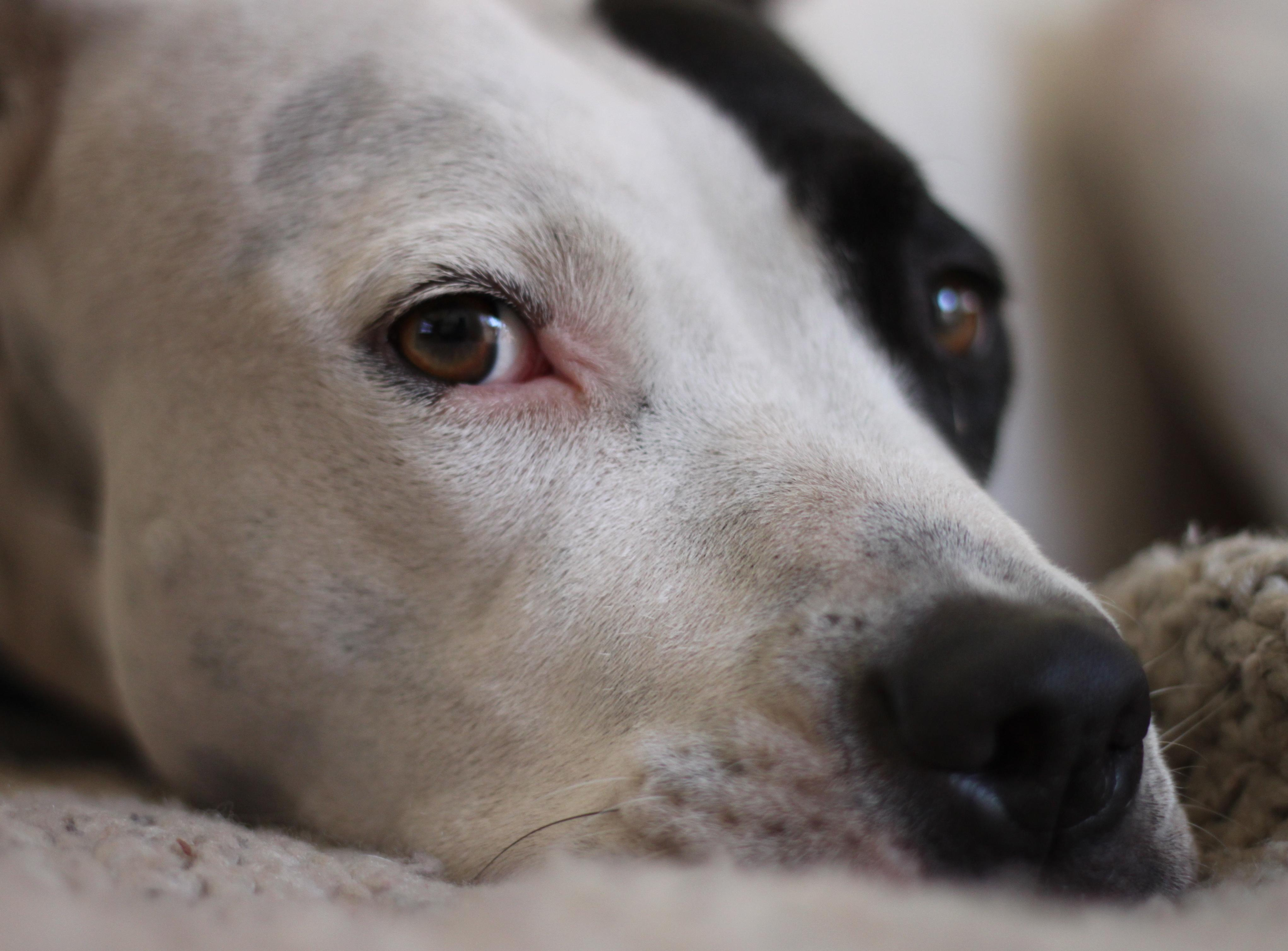 animal shelters lost dogs illinois