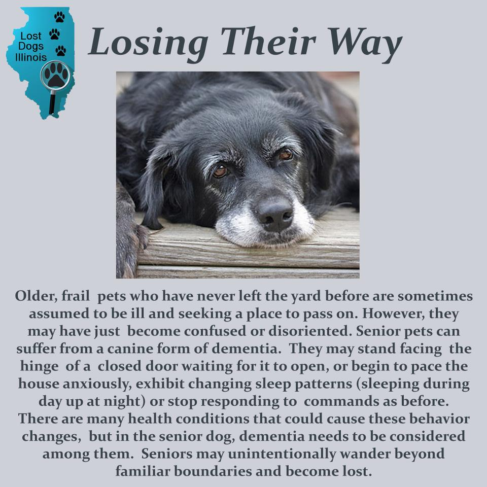 lost dogs | Lost Dogs Illinois