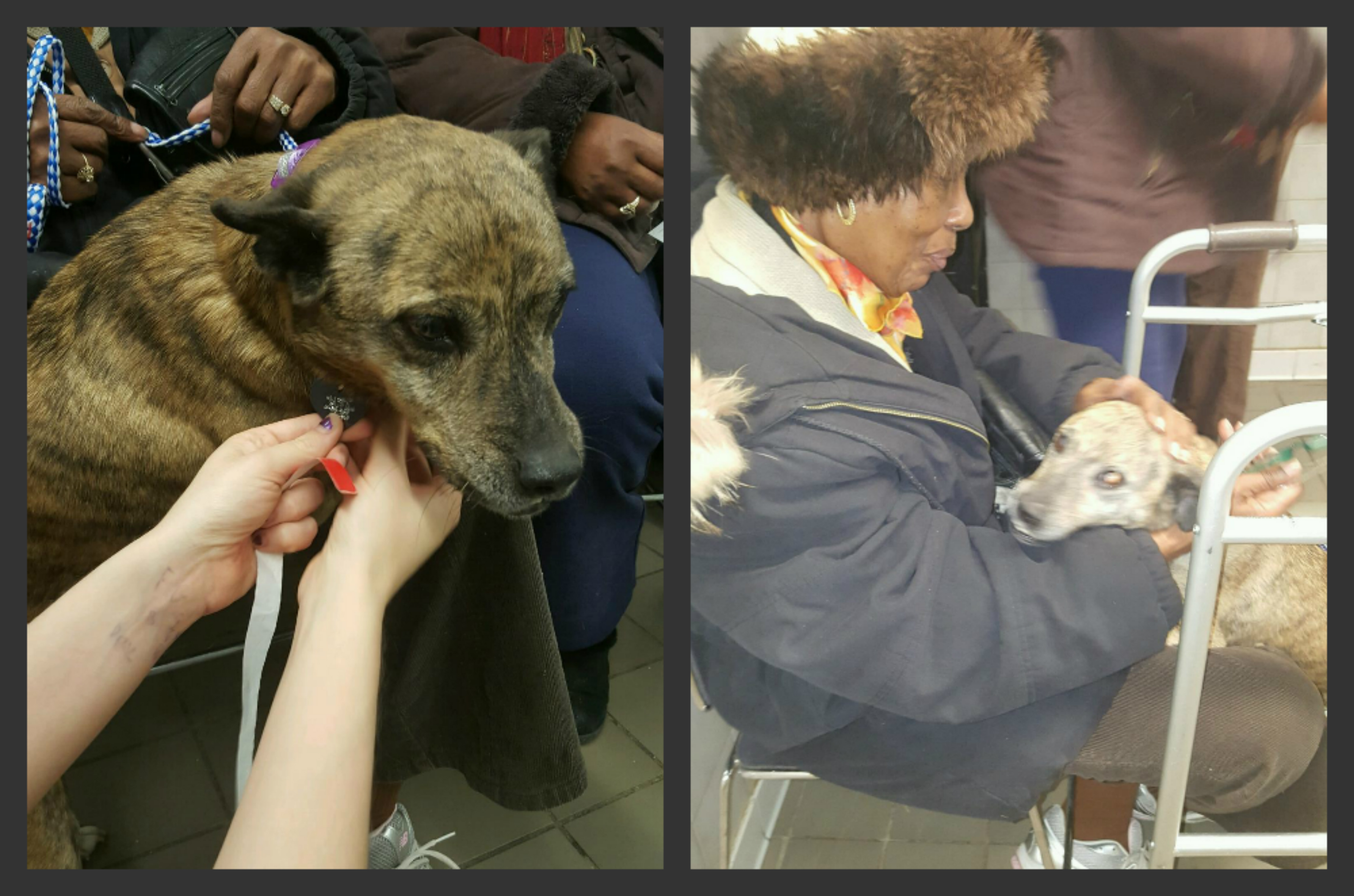Misty getting her new tag.  Her family being reunited with Misty