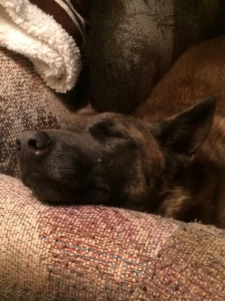 Rosie snoozing